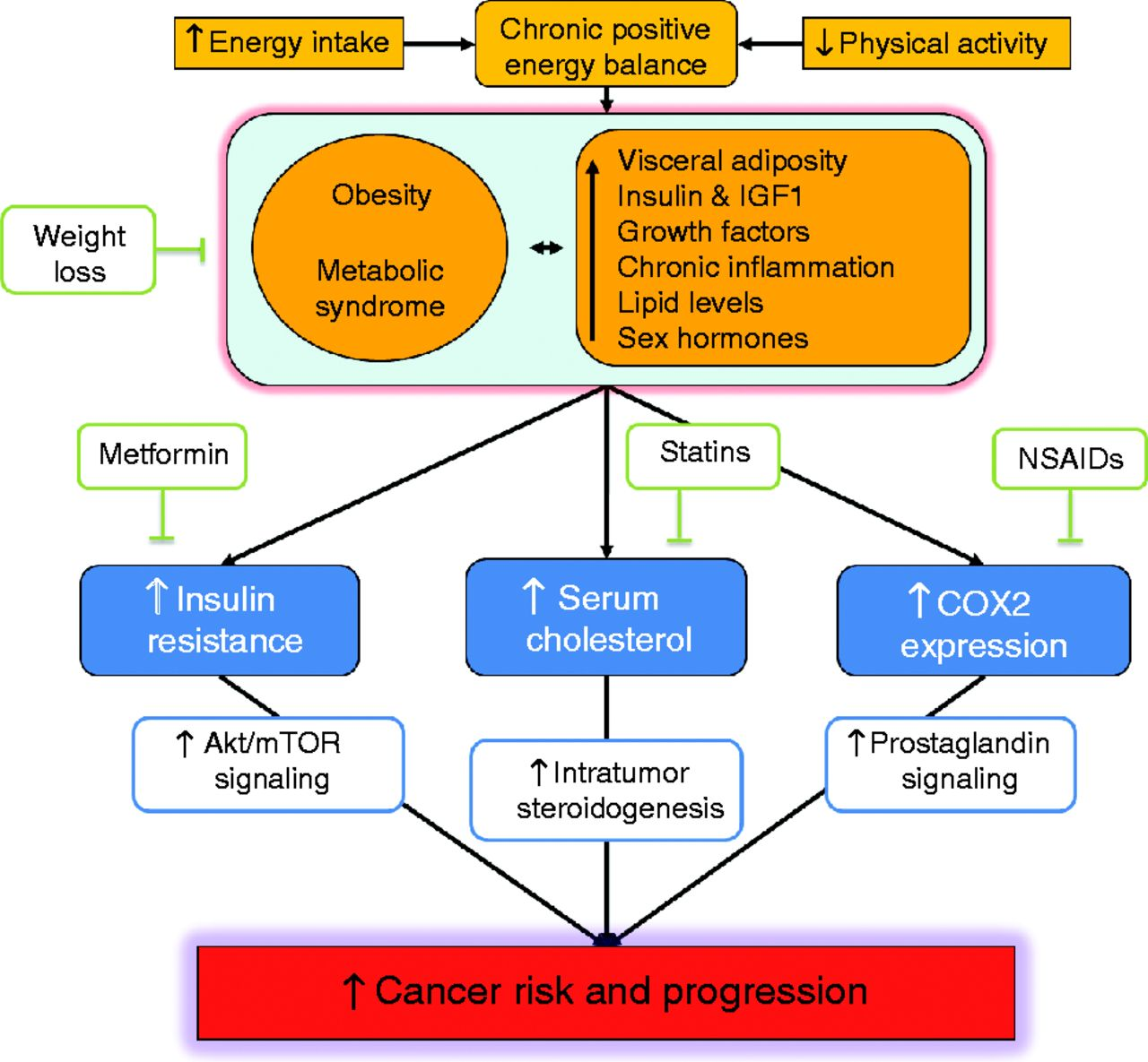 Obesity, Inflammation and Cancer: 7 (Energy Balance and Cancer)