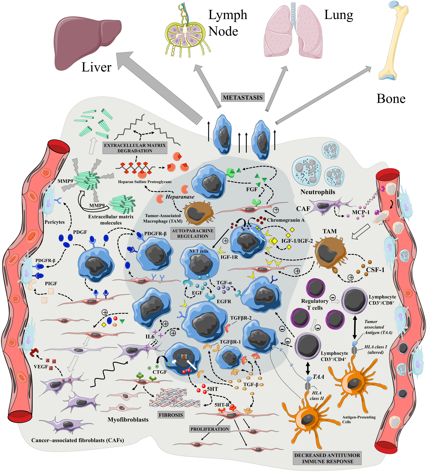 Role Of The Tumor Microenvironment In Digestive Neuroendocrine Schematics Depot Tm Ultrasonic Switch Circuit Schematic Overview Tumors Putative And Functions Different Components Tumoral