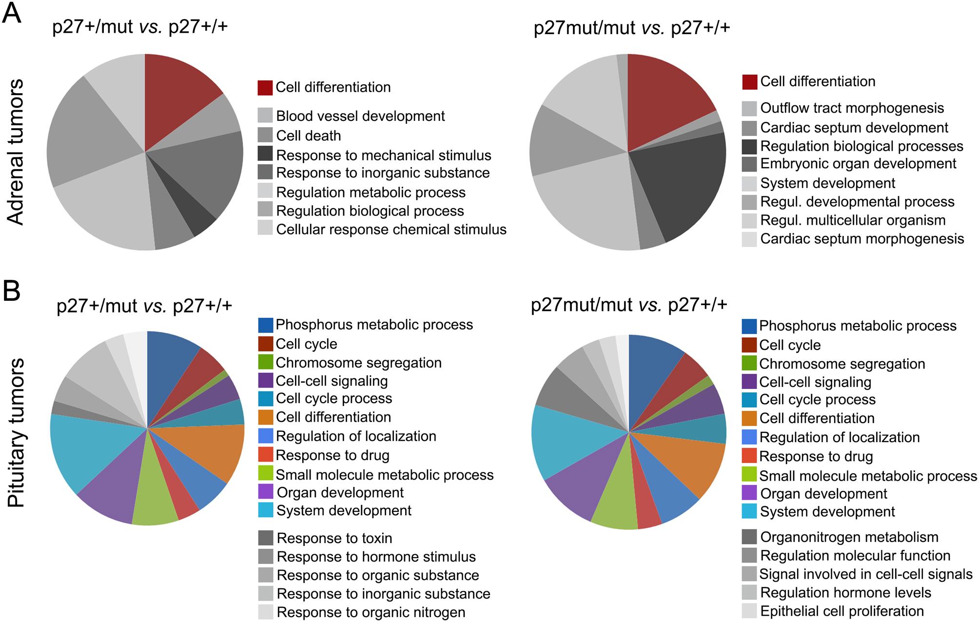 Characterization of neuroendocrine tumors in heterozygous