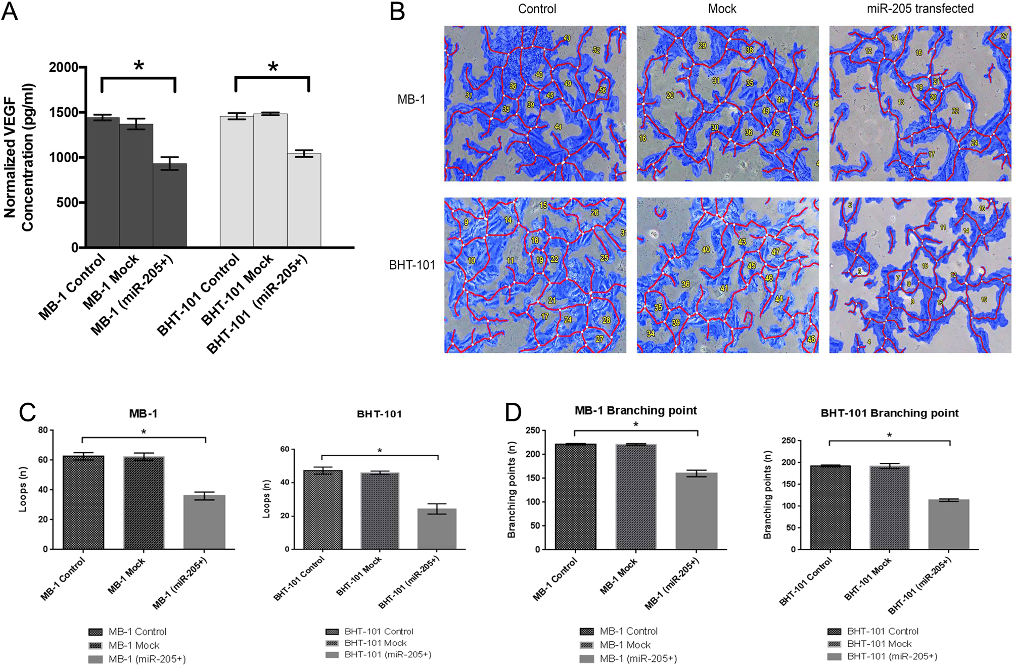 miR-205 targets angiogenesis and EMT concurrently in anaplastic