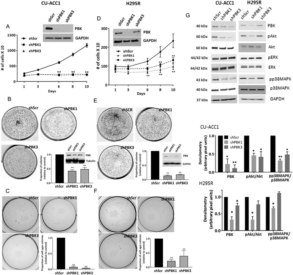 Targeting PDZ-binding kinase is anti-tumorigenic in novel