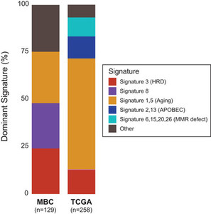 The molecular genetic make-up of male breast cancer in