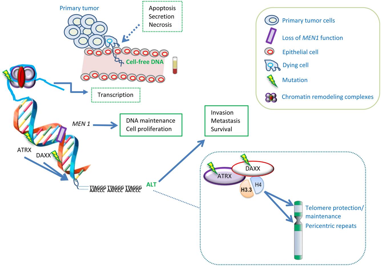 neuroendocrine cancer biomarker)
