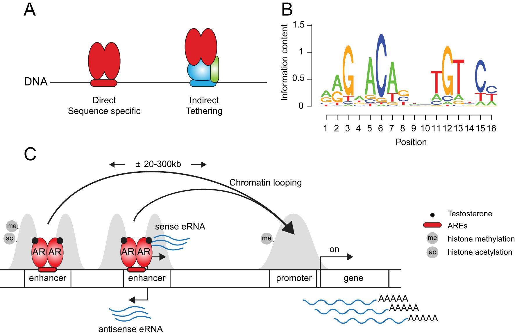 Androgen receptor enhancer usage and the chromatin regulatory