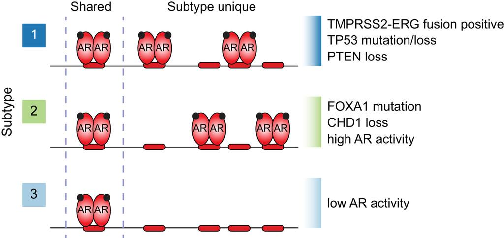 Androgen receptor enhancer usage and the chromatin