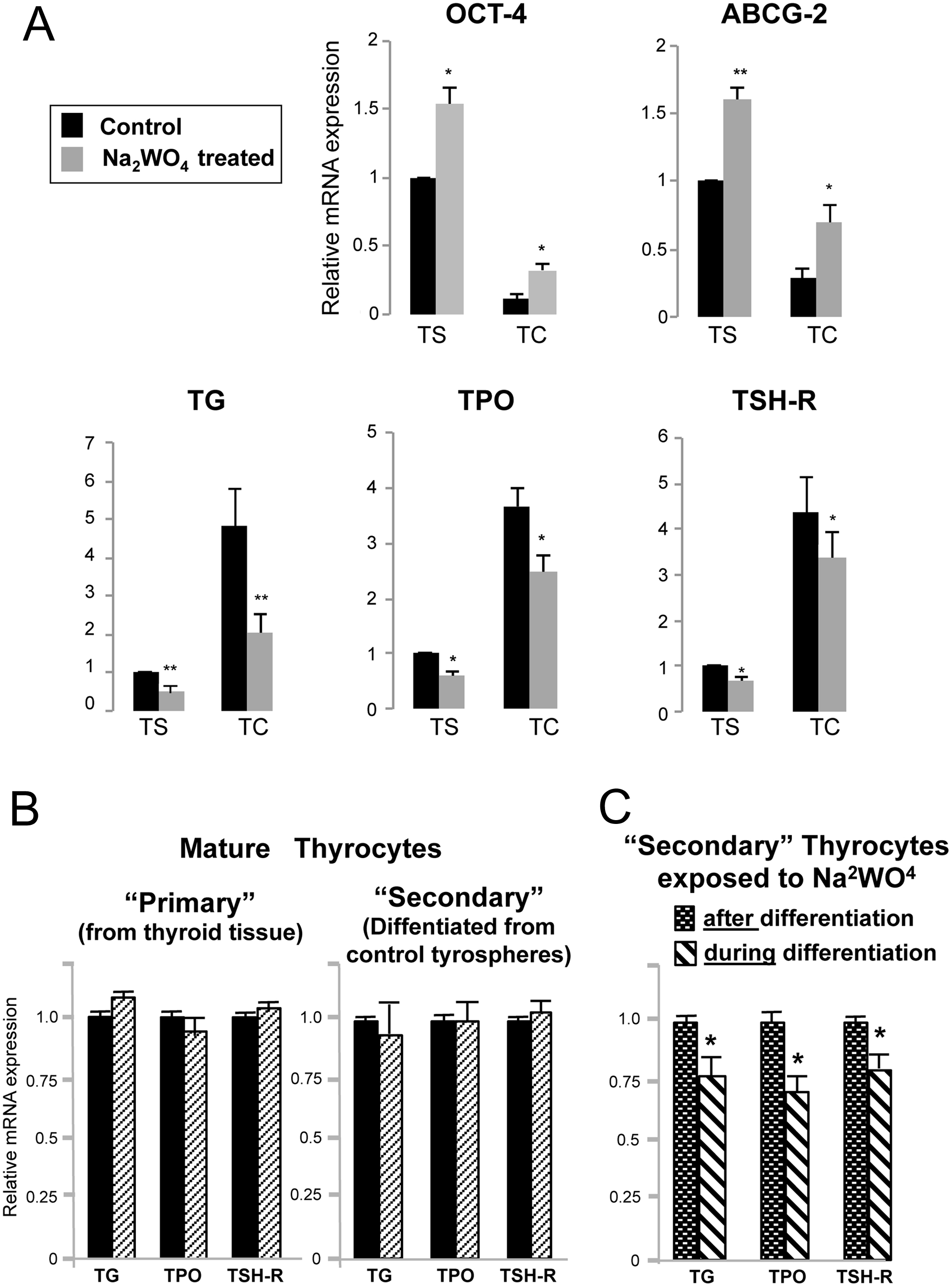 Effect of low-dose tungsten on human thyroid stem/precursor cells