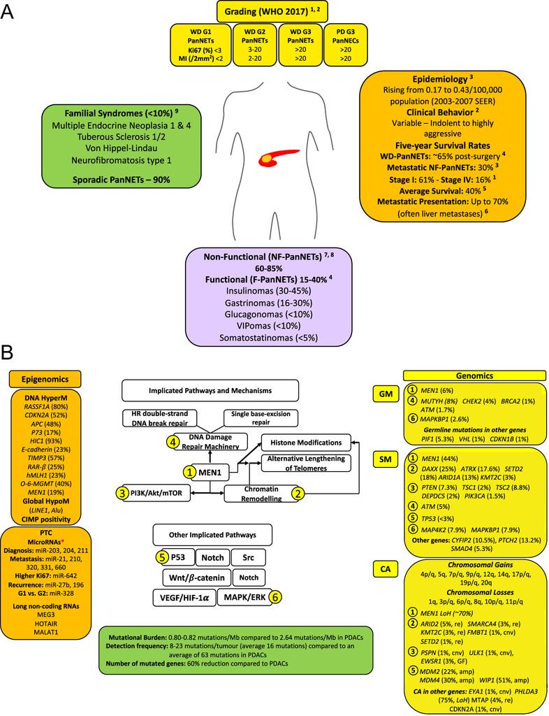 The evolving (epi)genetic landscape of pancreatic neuroendocrine